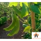 garrofon para paella ecologico y fresco directo de casa a domicilio